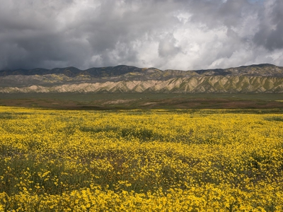 """Carrizo Plain, March 2017. Flowers in foreground are common hillside daisies (Monolopia lanceolata). """"The day before the hordes descended on the Carrizo Plain for the superbloom, a storm raged over the Temblor Range. The sun arose from the ground, rather than the sky."""" Arlyn Christopherson"""