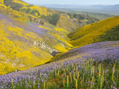 Temblor Range, Carrizo Plain