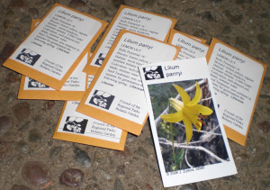 California native plant seed packets