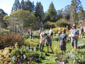 Fall 2014 Plant Sale Photo by Teresa LeYung Ryan