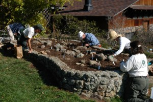 Planting bulb bed. Photo by Stephen W Edwards