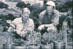 Garden Founder James Roof, on right, tends bristlecone pine seedlings in 1949. Photo courtesy of East Bay Regional Parks District